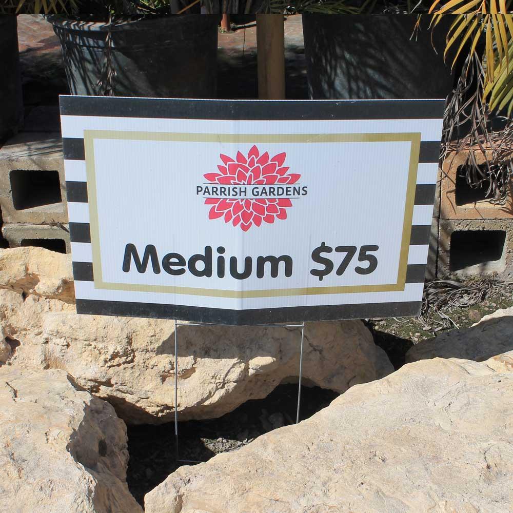 medium cap rock